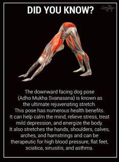 70 yoga first ideas  yoga yoga poses yoga fitness