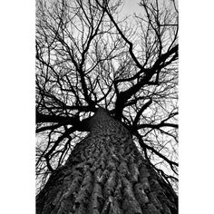 Beautiful Black and White Photos by Keith Dotson ❤ liked on Polyvore featuring backgrounds, photos, pictures, art, trees and fillers
