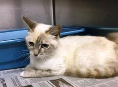 Crossposting to save lives: Catness: Beautiful stray is running out of time at Concord kill shelter