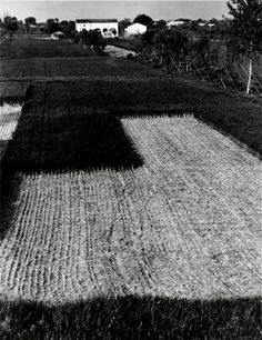 paul strand • for @Ryan Sullivan Lawrance McGreer