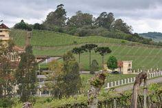 lugares em fotos : vale dos vinhedos ( bento gonçalves rs )