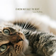 Quotes About Cats Fair 50 Cat Quotes That Only Feline Lovers Would Understand  Pinterest