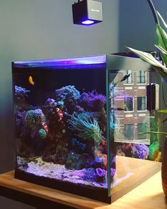 32 Amazing Wall Mounted Fish Tank Ideas For Your Interior Decor - Would you like to be a pet owner but you don't have enough space to raise one? Would you like to be a pet owner but you don't have much time for takin. Aquarium Marin, Coral Reef Aquarium, Home Aquarium, Marine Aquarium, Aquarium Fish Tank, Saltwater Aquarium Setup, Small Saltwater Tank, Small Fish Tanks, Marine Fish Tanks