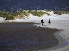 Horse Riding - Horse Riding on Noordhoek Beach, Cape Town, South Africa Horse Riding, Cape Town, South Africa, Horses, Beach, Water, Outdoor, Gripe Water, Outdoors
