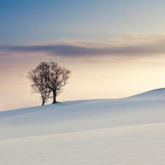 Snowy tree, shot on the hills above Calverton in Nottingham this Christmas