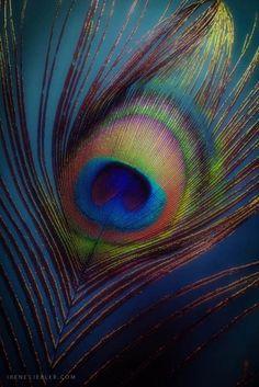 🌻 Jai Shri Radhe Krishna 🙏 🌻 Watch out Mahabharat and Ramayan All Episode Ramayan:… Radha Krishna Pictures, Radha Krishna Photo, Krishna Art, Radhe Krishna, Shri Hanuman, Baby Krishna, Peacock Painting, Peacock Art, Peacock Feathers
