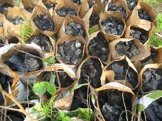 SOLO - FERTILIZANTES - CARVÃO - O biocarvão fábrica: Biochar da produção de carvão e reciclagem de resíduos agrícolas e florestais
