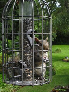 found this pic of a squirrel proof bird no such thing - Squirrel Proof Bird Feeders