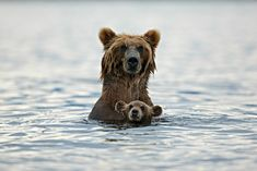 22 Adorable Parenting Moments in the Animal Kingdom Cubs Pictures, Wild Animals Pictures, Smile Pictures, Animals Images, Animal Pictures, Smile Pics, Amazing Pictures, Animal Kingdom, Photo Ours
