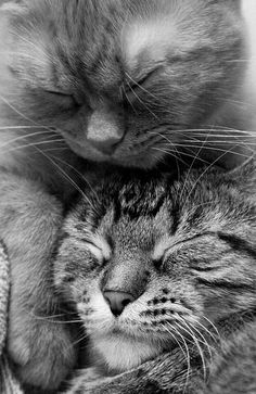 Sleepytime ..... #cute cat cats kitty kitten black and white aww omg adorable amazing