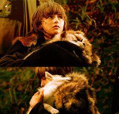 Game of thrones. Bran. Direwolf. Summer.