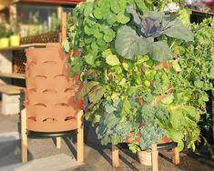 Vertical Veggie Garden in a 55 Gallon 'Drum!'