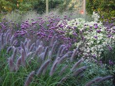 Private Garden in Rethmar: Ornamental Grasses & Perennials - Garden Types Prairie Garden, Meadow Garden, Garden Cottage, Dream Garden, Garden Types, Gravel Garden, Garden Plants, Garden Grass, Amazing Gardens