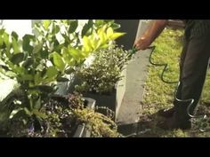 Sowing Seeds: Organic Gardening Advice For Your Garden - http://princefood-cooking.princefamily33.com/2016/07/25/sowing-seeds-organic-gardening-advice-for-your-garden-3/