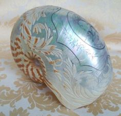 Seriously, intricately, beautifully carved nautilus shell by somebody might know who? I must have looked at this image every month for… Seashell Art, Seashell Crafts, Starfish, Nautilus Shell, Abalone Shell, Sea Creatures, Belle Photo, Sea Shells, Carving