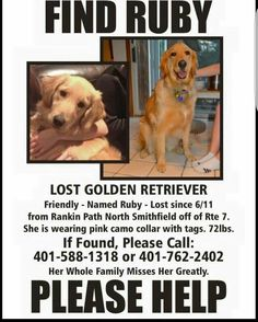 #LOSTdog 6-11-16 North #Smithfield #RI   #GoldenRetriever F Keep a look out. Please share. 401-588-1318 https://www.facebook.com/photo.php?fbid=10208270374256036&set=o.591743084301580&type=3