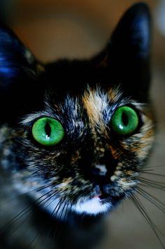 emerald eyes for a tortoiseshell kitty