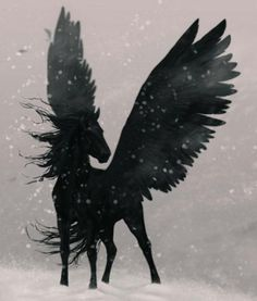 Pégase noir