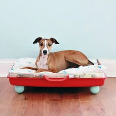 DIY Recy­cled Suit­case Dog Bed