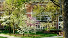 Centre College was honored with a 2016 Tree Campus USA recognition for the seventh year in a row by the...