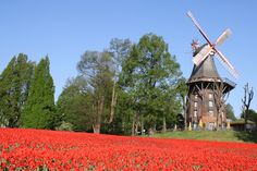 137 / In die Kaffeemühle am Wall einkehren -   Die Herdentorswallmühle – auch Herdentorsmühle, zumeist aber Mühle am Wall genannt – ist eine Windmühle in den Wallanlagen der Stadt Bremen. Seit 1953 ist die Mühle als Einzeldenkmal in der Landesdenkmalliste der Freien Hansestadt Bremen verzeichnet