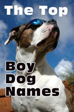 boy dog names header-boxer dog in the sunshine