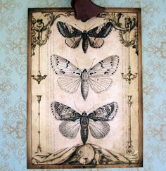 vintage look butterfly tags made by jolipapier
