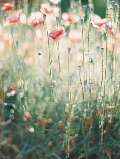 inspiration   spring blooms   erich mcvey photography   via: style me pretty: