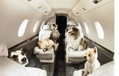 Jet Charter Pets traveling in style can not handle