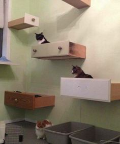 Why buy an expensive cat tree from the store when you can easily build one for a song? Why, you can use old drawers to make your DIY cat tree! Cat Climbing Wall, Cat Climbing Shelves, Diy Cat Tree, Old Drawers, Dresser Drawers, Cat Playground, Cat Room, Cat Condo, Cat Furniture