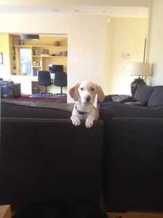 Gender : Female Breed : White/Cream Pointer Lost Date : Jul 04, 2014 Alert Date : Jul 05, 2014 Missing Address : 21st Place Missing City : Santa Monica Missing State : California Missing Zipcode : 90402 Alert Status : Active Contact Name : Alex Phone Number : 3104981065