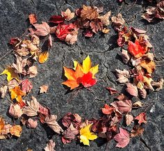 Taken by me, with my iPhone 5s...autumn leaves and fall colors