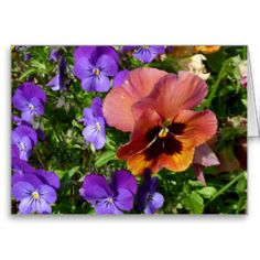 Pansy and Violets Card