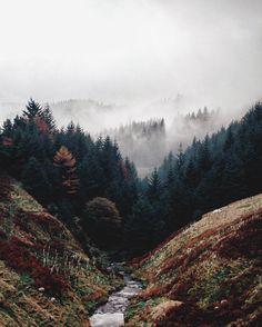 Jack Anstey | Ladyclough Forest