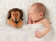 Adorable Baby And Puppy Napping Together - Buy A3 Poster | Starting from Rs. 199