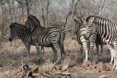 Kruger National Park 2009 Mauritius, Kruger National Park, National Parks, South Africa, Holidays, Travel, Animals, Wilderness, Holidays Events