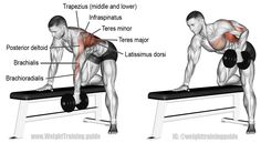Bent over dumbbell row. A compound exercise. Target muscle: None. Multiple back arm and shoulder muscles act in synergy. Synergists: Latissimus Dorsi Middle and Lower Trapezius Rhomboids Teres Major Posterior Deltoid Infraspinatus Teres Minor Bra Sport Fitness, Muscle Fitness, Fitness Workouts, Corps Fitness, Fitness Weightloss, Mens Fitness, Fitness Tips, Back Workout Program, Workout Programs
