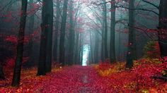 The Black forest, Germania