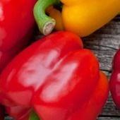 """8 aliments qui brûlent les graisses Les asperges sont riches en vitamines C et B6. Ensembles, elles déclenchent la transformation d'un acide aminé appelé """"tyrosine"""" en """"noradrénaline"""". Ce neurostrametteur sert à réduire l'appé..."""