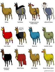 Not sure why exactly, but pretty much everything about Llamas cracks me up.