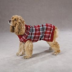 Amazon.com: Zack & Zoey 8-Inch Acrylic English Plaid Pet Sweater, XX-Small, Red: Pet Supplies