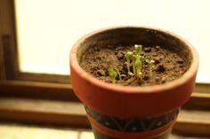 #loveplants #growingweed #notweed #nodrugs