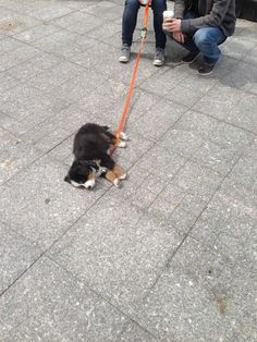 """""""I'm very out of shape, guys. Shutup."""" 