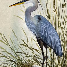 Great Blue Heron Shore Art Print by James Williamson. Choose from multiple sizes and hundreds of frame and mat options. Driftwood Shores, Flying Bird Silhouette, Thing 1, Blue Heron, Canvas Prints, Art Prints, Original Paintings, Acrylic Paintings, All Art