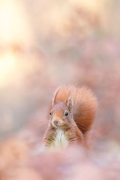 Squirrel on pink Animals Beautiful, Cute Animals, Photo Animaliere, Shades Of Peach, Hamster, Soft Autumn, Judy Garland, All Nature, Tier Fotos