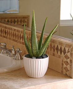 Create a Fresh Spa feeling in your bathroom with Aloe Vera - The Cactus Collection Inspirations