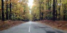 Σημείο αναφοράς για το δασικό πλούτο της ορεινής Ηλείας και γενικότερα της Ελλάδας, αποτελεί το περίφημο < Δρυοδάσος της Φολόης. >Ένα δάσος που μοιάζει μαγεμένο. Πέντε εκατομμύρια δέντρα που φτανουν ως τον ουρανό Around The Worlds, Country Roads, Outdoor, Outdoors, Outdoor Games, The Great Outdoors
