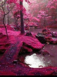 Bosque rosa en Japón