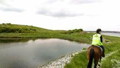 Island Trek in Galway Bay Riding Holiday, Small Island, Horse Riding, Trekking, Equestrian, Vacations, Irish, Ireland, Horses