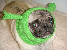 Poor pug! £9.87 # http://www.etsy.com/listing/72806519/pug-dog-hat-shrek-made-to-order?ref=sr_gallery_38&ga;_search_query=+pugs&ga;_search_type=handmade&ga;_facet=handmade